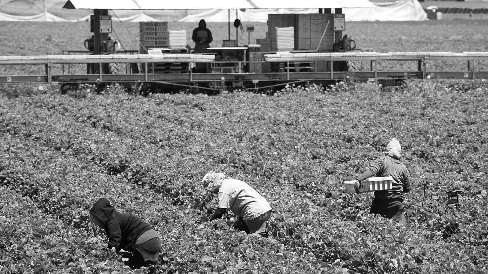 Women working in field